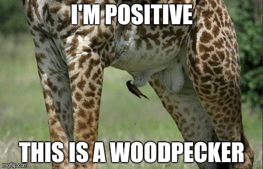 Got wood? | I'M POSITIVE THIS IS A WOODPECKER | image tagged in woodpecker,git wood,giraffe pics | made w/ Imgflip meme maker