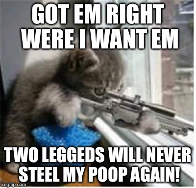 cats with guns | GOT EM RIGHT WERE I WANT EM TWO LEGGEDS WILL NEVER STEEL MY POOP AGAIN! | image tagged in cats with guns | made w/ Imgflip meme maker