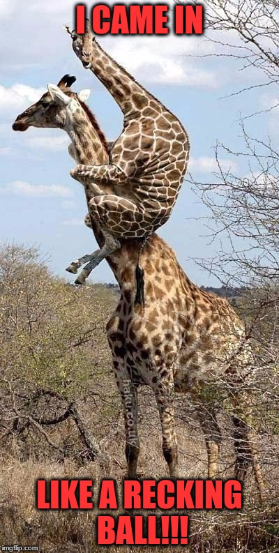 Funny Giraffe | I CAME IN LIKE A RECKING BALL!!! | image tagged in funny giraffe | made w/ Imgflip meme maker