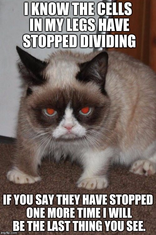 Grumpy Cat red eyes | I KNOW THE CELLS IN MY LEGS HAVE STOPPED DIVIDING IF YOU SAY THEY HAVE STOPPED ONE MORE TIME I WILL BE THE LAST THING YOU SEE. | image tagged in grumpy cat red eyes | made w/ Imgflip meme maker