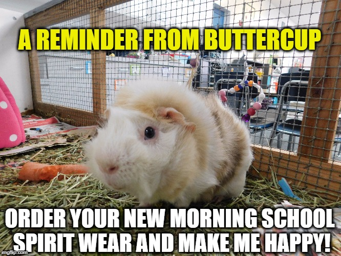 A REMINDER FROM BUTTERCUP ORDER YOUR NEW MORNING SCHOOL SPIRIT WEAR AND MAKE ME HAPPY! | image tagged in school | made w/ Imgflip meme maker