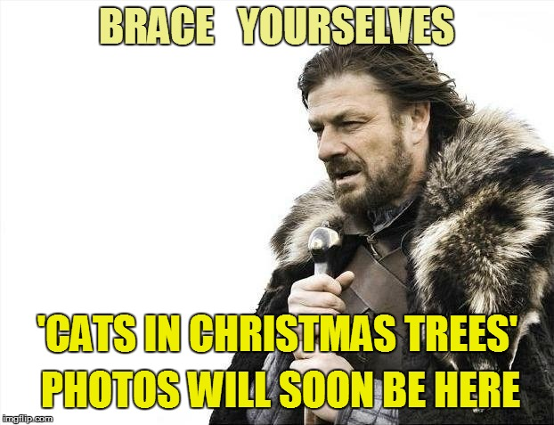 Noooooooooo!!! | BRACE   YOURSELVES 'CATS IN CHRISTMAS TREES' PHOTOS WILL SOON BE HERE | image tagged in brace yourself | made w/ Imgflip meme maker