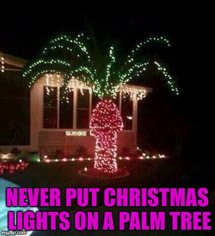 NEVER PUT CHRISTMAS LIGHTS ON A PALM TREE | made w/ Imgflip meme maker