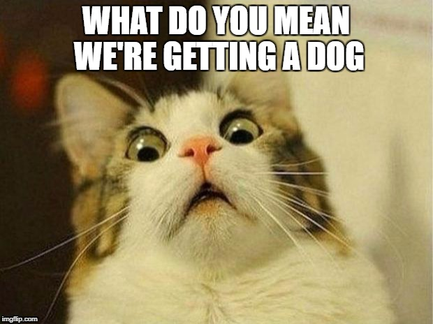 Scared Cat Meme | WHAT DO YOU MEAN WE'RE GETTING A DOG | image tagged in memes,scared cat | made w/ Imgflip meme maker