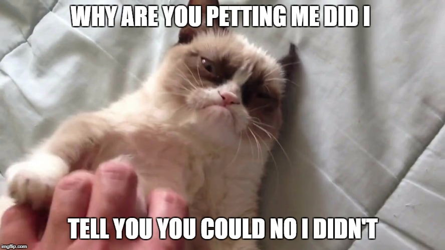Petting Grumpy Cat | WHY ARE YOU PETTING ME DID I TELL YOU YOU COULD NO I DIDN'T | image tagged in petting grumpy cat | made w/ Imgflip meme maker