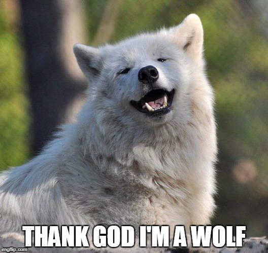 supersecretwolf | THANK GOD I'M A WOLF | image tagged in supersecretwolf | made w/ Imgflip meme maker