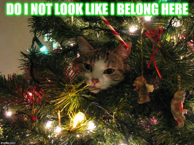 Cat Ornament |  DO I NOT LOOK LIKE I BELONG HERE | image tagged in memes,happy cat,in,christmas tree,pretend,ornament | made w/ Imgflip meme maker