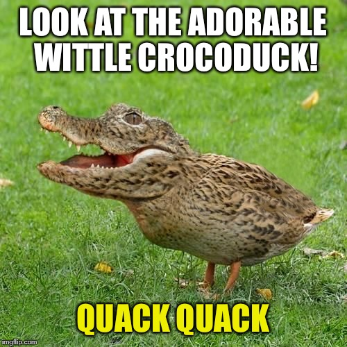 Crocoduck | LOOK AT THE ADORABLE WITTLE CROCODUCK! QUACK QUACK | image tagged in crocoduck | made w/ Imgflip meme maker