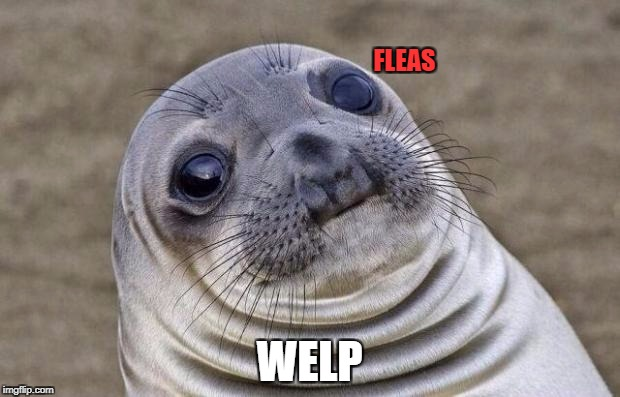 Awkward Moment Sealion Meme | FLEAS WELP | image tagged in memes,awkward moment sealion | made w/ Imgflip meme maker