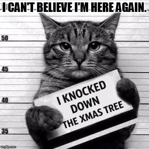 Booking Photo |  I CAN'T BELIEVE I'M HERE AGAIN. | image tagged in memes,cat,police,photos,knockout,christmas tree | made w/ Imgflip meme maker