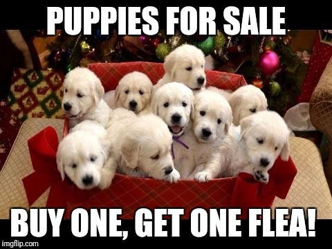 PUPPIES FOR SALE BUY ONE, GET ONE FLEA! | image tagged in puppies | made w/ Imgflip meme maker