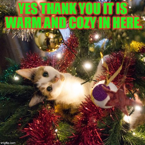 YES THANK YOU IT IS WARM AND COZY IN HERE. | made w/ Imgflip meme maker