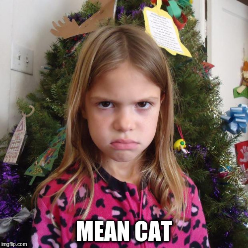 MEAN CAT | made w/ Imgflip meme maker