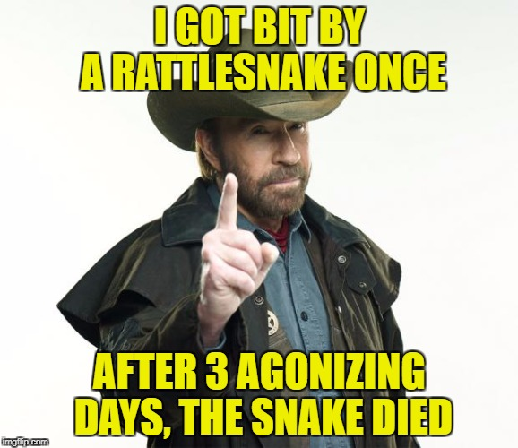 Chuck at it again! | I GOT BIT BY A RATTLESNAKE ONCE AFTER 3 AGONIZING DAYS, THE SNAKE DIED | image tagged in memes,chuck norris finger,chuck norris,funny | made w/ Imgflip meme maker