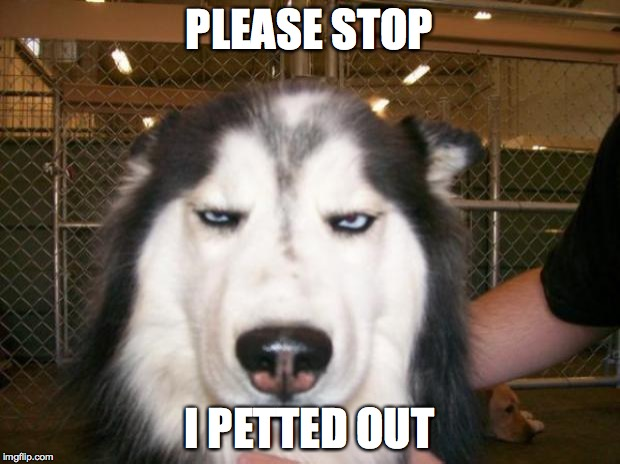 Annoyed Dog | PLEASE STOP I PETTED OUT | image tagged in annoyed dog | made w/ Imgflip meme maker