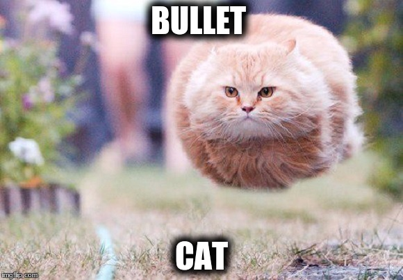 BULLET CAT | image tagged in bullet cat | made w/ Imgflip meme maker