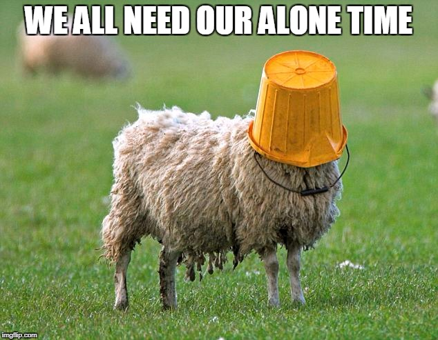 WE ALL NEED OUR ALONE TIME | image tagged in alone,sheep,food | made w/ Imgflip meme maker