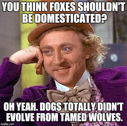 Creepy Condescending Wonka Meme | YOU THINK FOXES SHOULDN'T BE DOMESTICATED? OH YEAH. DOGS TOTALLY DIDN'T EVOLVE FROM TAMED WOLVES. | image tagged in memes,creepy condescending wonka | made w/ Imgflip meme maker