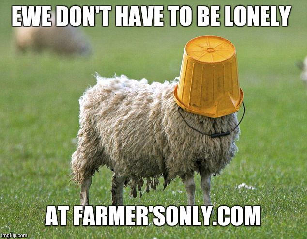stupid sheep | EWE DON'T HAVE TO BE LONELY AT FARMER'SONLY.COM | image tagged in stupid sheep | made w/ Imgflip meme maker