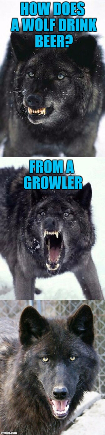 Bad Pun Insanity Wolf | HOW DOES A WOLF DRINK BEER? FROM A GROWLER | image tagged in bad pun insanity wolf,americanpenguin | made w/ Imgflip meme maker