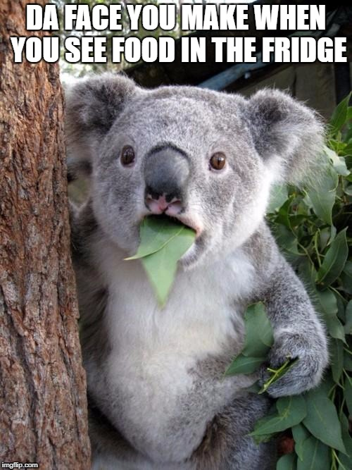 Surprised Koala Meme | DA FACE YOU MAKE WHEN YOU SEE FOOD IN THE FRIDGE | image tagged in memes,surprised koala | made w/ Imgflip meme maker