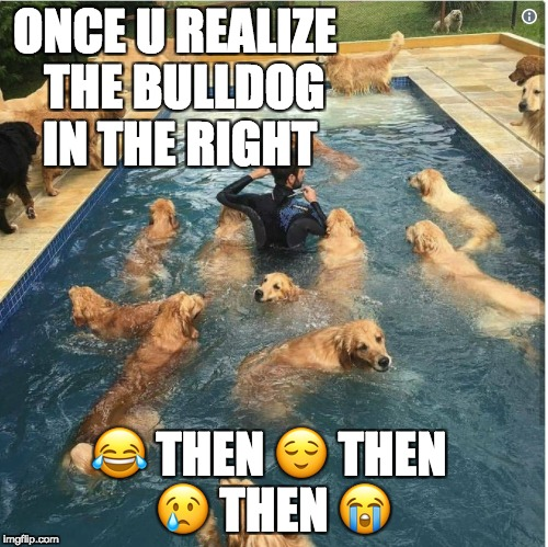 I AM SO LONELY |  ONCE U REALIZE  THE BULLDOG IN THE RIGHT; 😂 THEN 😌 THEN 😢 THEN 😭 | image tagged in forever alone,bulldogsad,golden retriever | made w/ Imgflip meme maker