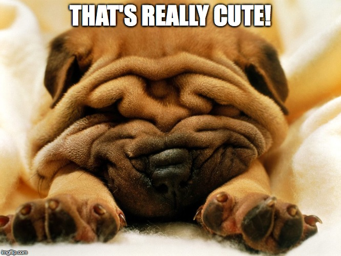 sleepy shar pei puppy | THAT'S REALLY CUTE! | image tagged in sleepy shar pei puppy | made w/ Imgflip meme maker