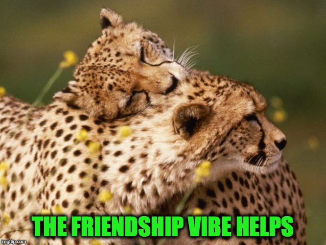 THE FRIENDSHIP VIBE HELPS | made w/ Imgflip meme maker