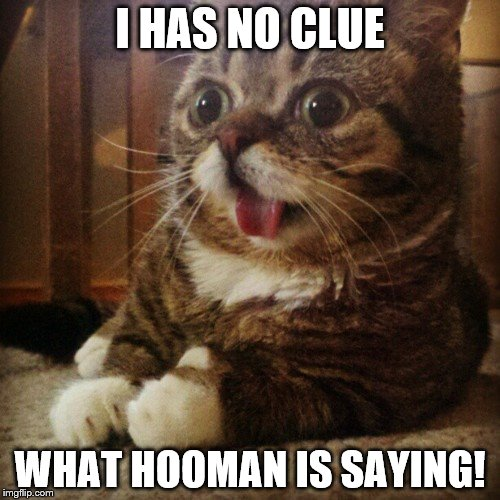 I HAS NO CLUE WHAT HOOMAN IS SAYING! | image tagged in derp kitten | made w/ Imgflip meme maker
