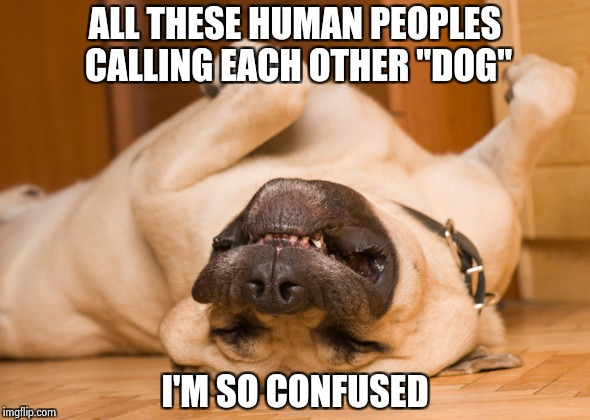 "I don't know , Dog | ALL THESE HUMAN PEOPLES CALLING EACH OTHER ""DOG"" I'M SO CONFUSED 