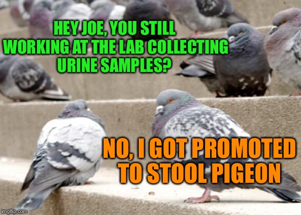 I hope it came with a good pay raise... | HEY JOE, YOU STILL WORKING AT THE LAB COLLECTING URINE SAMPLES? NO, I GOT PROMOTED TO STOOL PIGEON | image tagged in lynch1979,lol,memes | made w/ Imgflip meme maker