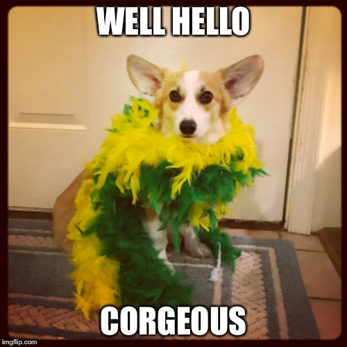 Well Hello Corgeous | WELL HELLO CORGEOUS | image tagged in animals,corgi,gorgeous,glamour shots | made w/ Imgflip meme maker
