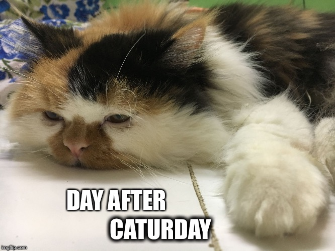 DAY AFTER CATURDAY | image tagged in day after caturday | made w/ Imgflip meme maker