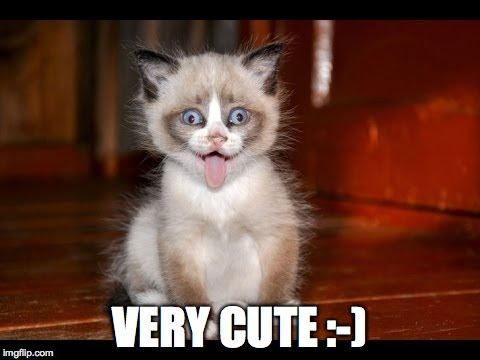 goofy kitten | VERY CUTE :-) | image tagged in goofy kitten | made w/ Imgflip meme maker