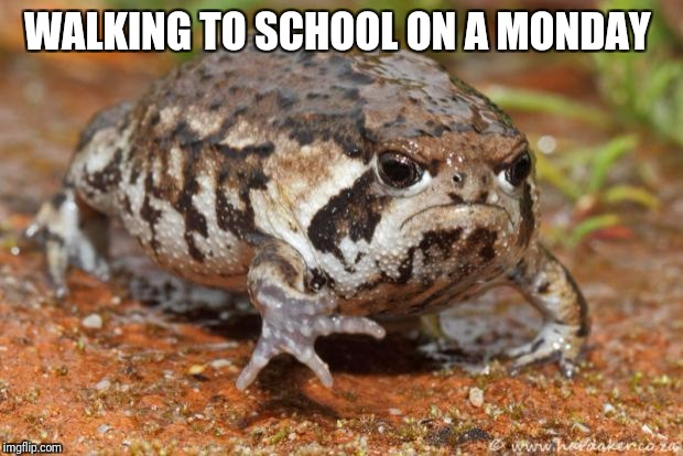 Grumpy Toad Meme | WALKING TO SCHOOL ON A MONDAY | image tagged in memes,grumpy toad | made w/ Imgflip meme maker