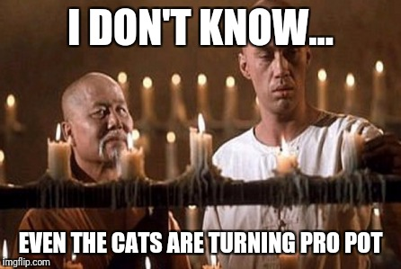 I DON'T KNOW... EVEN THE CATS ARE TURNING PRO POT | made w/ Imgflip meme maker