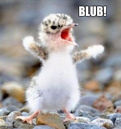 BLUB! | image tagged in early bird | made w/ Imgflip meme maker