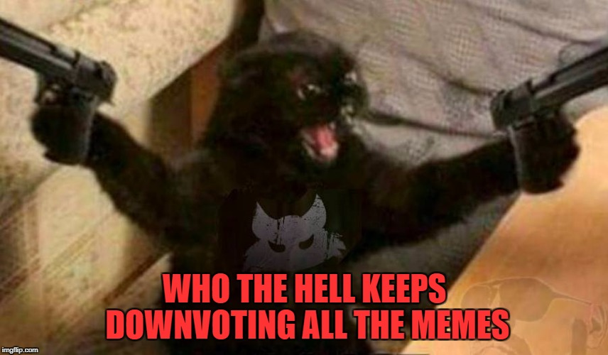 Down With Downvotes Weekend Dec 8-10, a JBmemegeek, 1forpeace & isayisay campaign! | WHO THE HELL KEEPS DOWNVOTING ALL THE MEMES | image tagged in cat guns,memes,downvotes,down with downvotes weekend,trolls | made w/ Imgflip meme maker