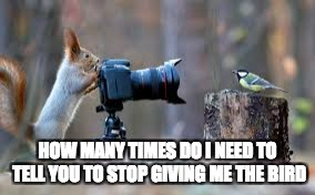 Giving me the Bird | HOW MANY TIMES DO I NEED TO TELL YOU TO STOP GIVING ME THE BIRD | image tagged in bird,funny,funny memes | made w/ Imgflip meme maker