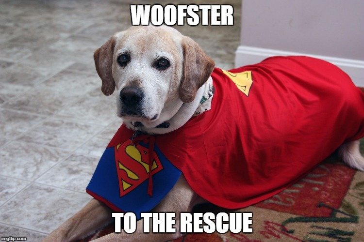 WOOFSTER TO THE RESCUE | image tagged in super dog | made w/ Imgflip meme maker