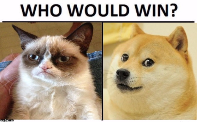 Who would win? | image tagged in doge vs grumpy cat | made w/ Imgflip meme maker
