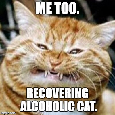 ME TOO. RECOVERING ALCOHOLIC CAT. | made w/ Imgflip meme maker