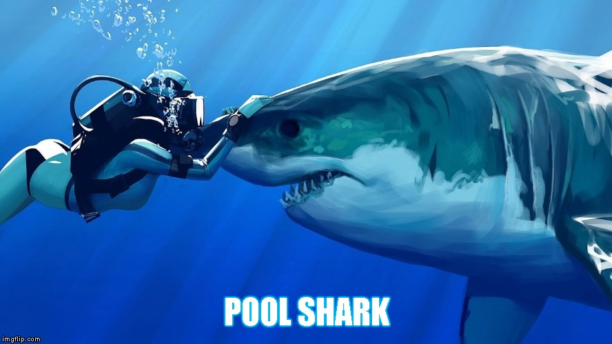 Shark | POOL SHARK | image tagged in memes,shark,pool shark,diver,water | made w/ Imgflip meme maker