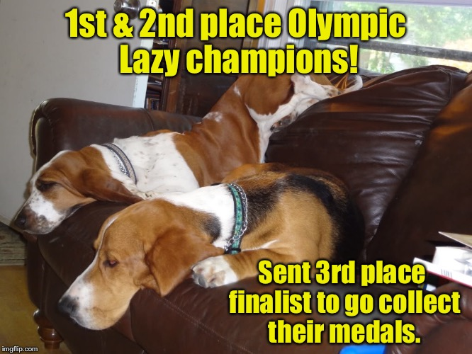 Olympic Dog events! | 1st & 2nd place Olympic Lazy champions! Sent 3rd place finalist to go collect their medals. | image tagged in memes,basset hounds,lazy award,other collects medal,dogs | made w/ Imgflip meme maker