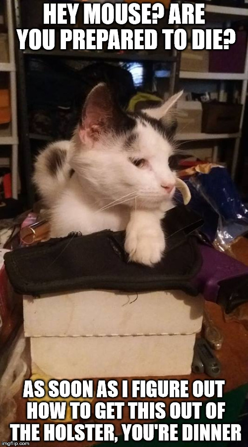 My daughter's cat is taking mousing to a whole new level | HEY MOUSE? ARE YOU PREPARED TO DIE? AS SOON AS I FIGURE OUT HOW TO GET THIS OUT OF THE HOLSTER, YOU'RE DINNER | image tagged in cat,gun,mouse killer | made w/ Imgflip meme maker