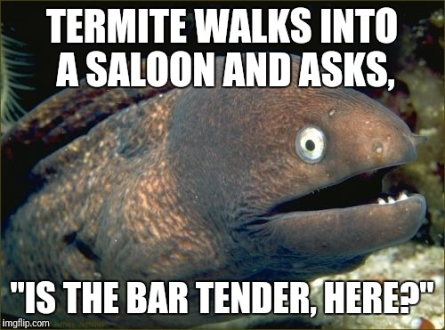 "Bad Joke Eel Meme | TERMITE WALKS INTO A SALOON AND ASKS, ""IS THE BAR TENDER, HERE?"" 