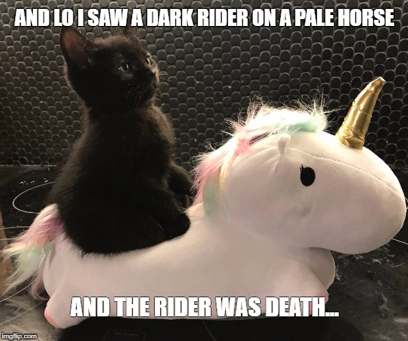 AND LO I SAW A DARK RIDER ON A PALE HORSE AND THE RIDER WAS DEATH... | image tagged in end of times | made w/ Imgflip meme maker