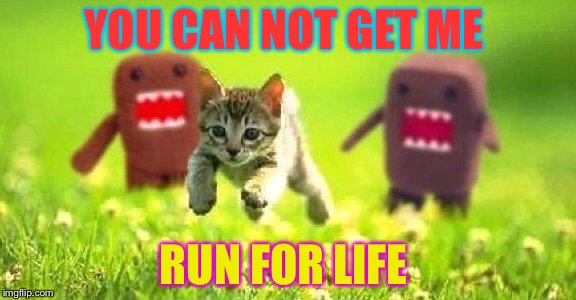 Kittens Running from Domo | YOU CAN NOT GET ME RUN FOR LIFE | image tagged in kittens running from domo | made w/ Imgflip meme maker