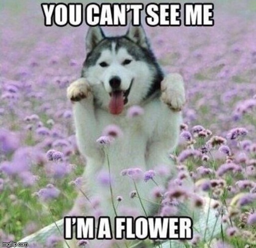 HE'S A FLOWER | image tagged in flower,dogs | made w/ Imgflip meme maker