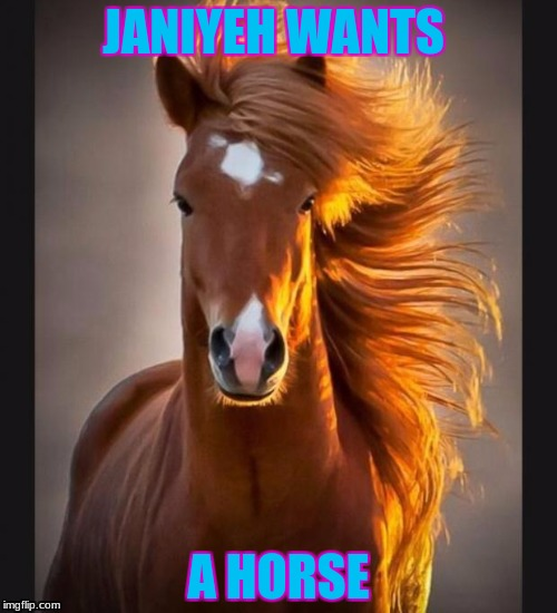 Horse | JANIYEH WANTS A HORSE | image tagged in horse | made w/ Imgflip meme maker